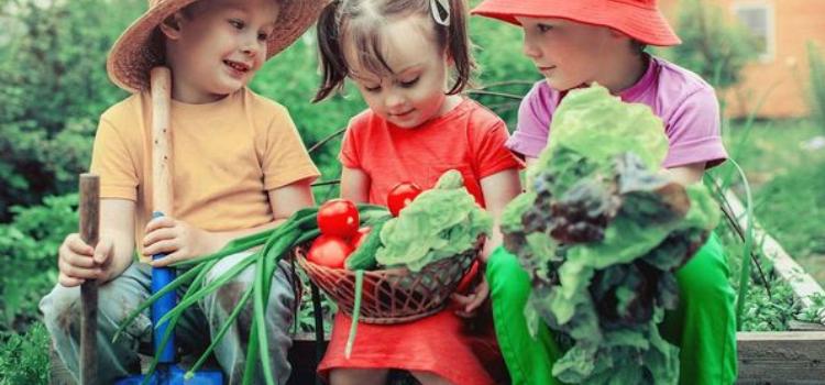 Organic Farming | Spring Term